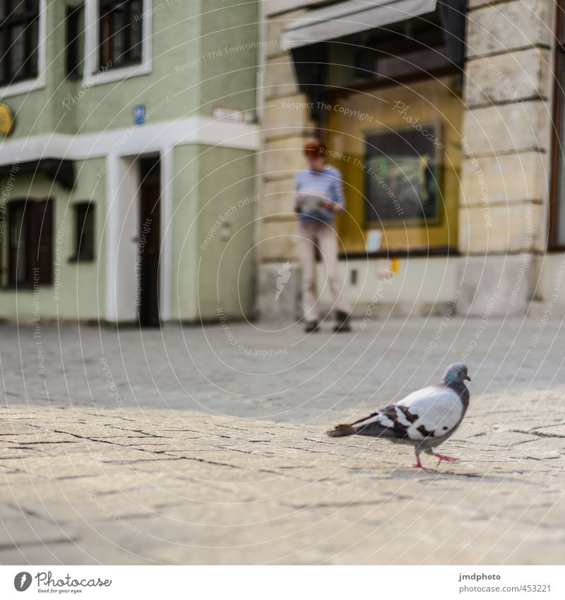 Take a pigeon for a walk... Human being Masculine Adults 1 Environment Munich Town Downtown House (Residential Structure) Paving stone Cobbled pathway Animal