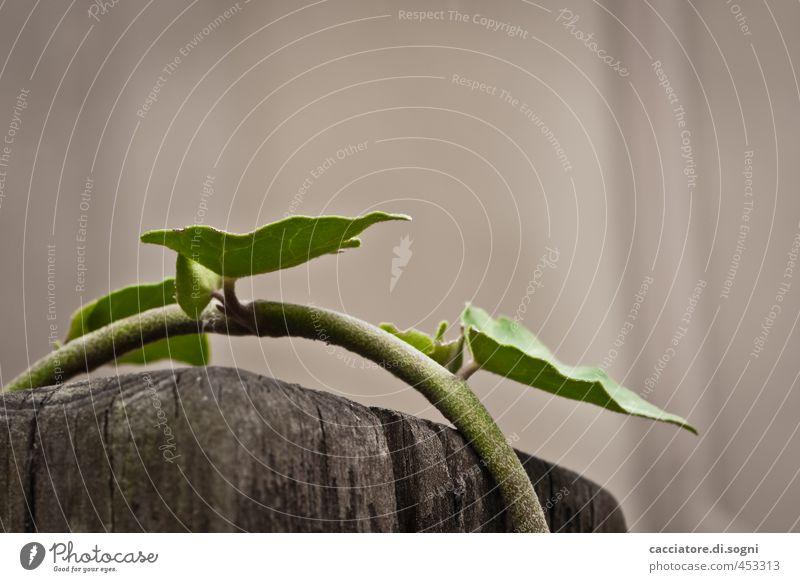 Nature Green Plant Loneliness Environment Freedom Gray Success Perspective Simple Hope Joie de vivre (Vitality) Curiosity Serene Long Bizarre