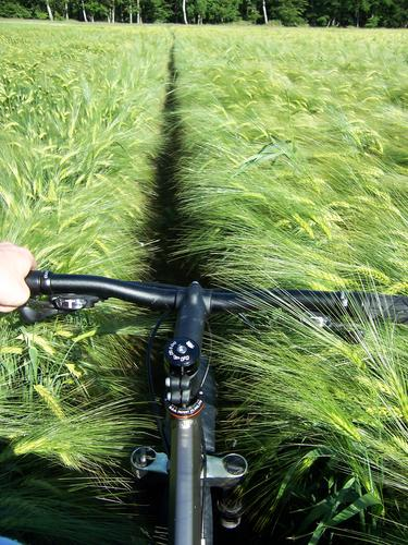 Road?!? Bicycle Cornfield Field Summer Territory Vacation & Travel Mountain bike First person view Ocean Transport Harvest Mecklenburg-Western Pomerania marine