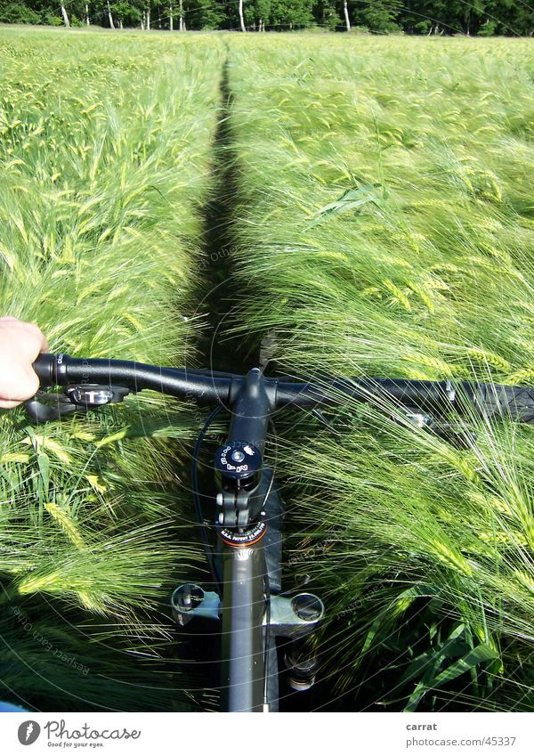 Vacation & Travel Summer Ocean Line Bicycle Field Transport Harvest Cornfield Territory Mecklenburg-Western Pomerania Mountain bike Egotistical