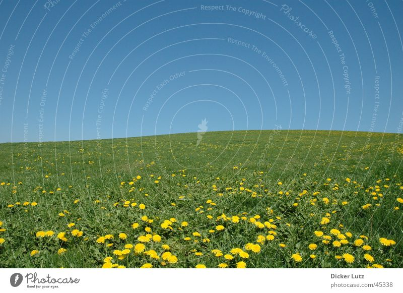 Sunny, cloudless, 28° C Meadow Horizon Green Hill Summer Flower Dandelion Sky Blue