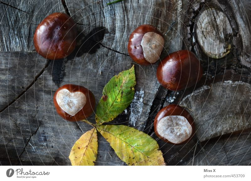 Herzbst is here Nature Plant Autumn Tree Leaf Forest Love Autumnal Chestnut Heart-shaped Tree trunk Annual ring Deserted Close-up Chestnut leaf Colour photo