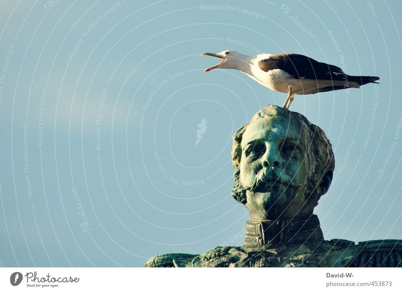 Sky Blue Animal Above Bird Stand Places Threat Contact Anger Discover Brave Fear of flying Seagull Statue Scream