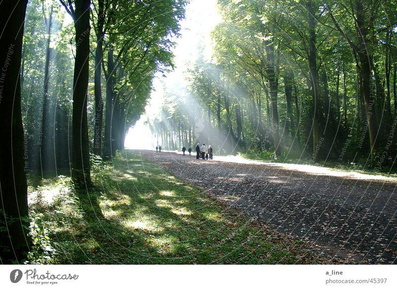 stroll Tree Sunbeam Forest Promenade Light Shadow