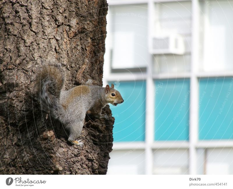 Blue City White Tree Animal Wall (building) Wall (barrier) Gray Small Brown Park Facade Wild animal High-rise Free Cute