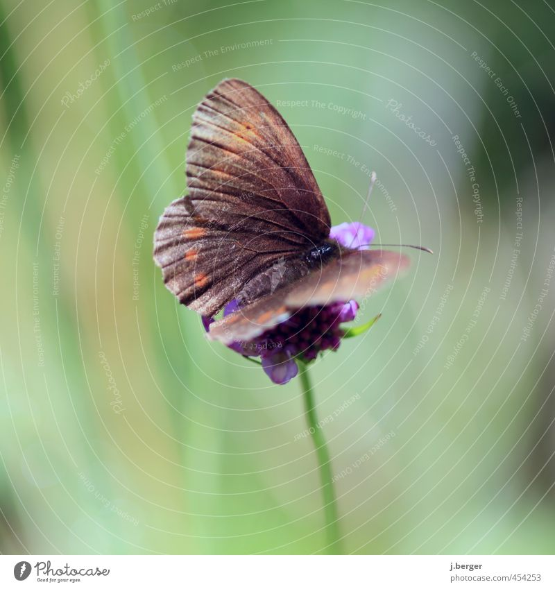 small brown Nature Animal Wild animal Butterfly 1 Wait Brown Green Blossom Flower Colour photo Subdued colour Exterior shot Close-up Detail