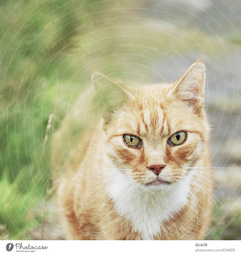 Rigid look Grass Garden Meadow Lanes & trails Animal Pet Cat 1 Observe Hunting Looking Stand Aggression Threat Bright Wild Brown Green Pink Black White Power