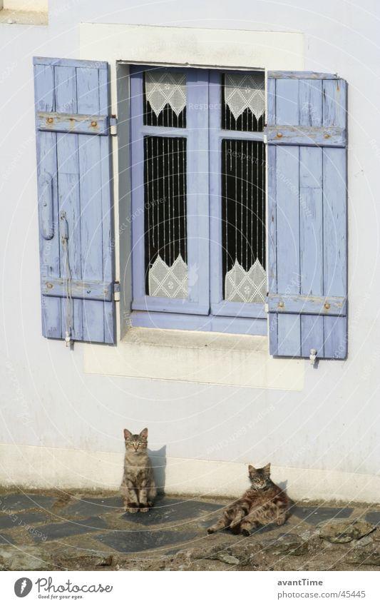 Cats Siesta Calm Break Relaxation Window Shutter France Belle île