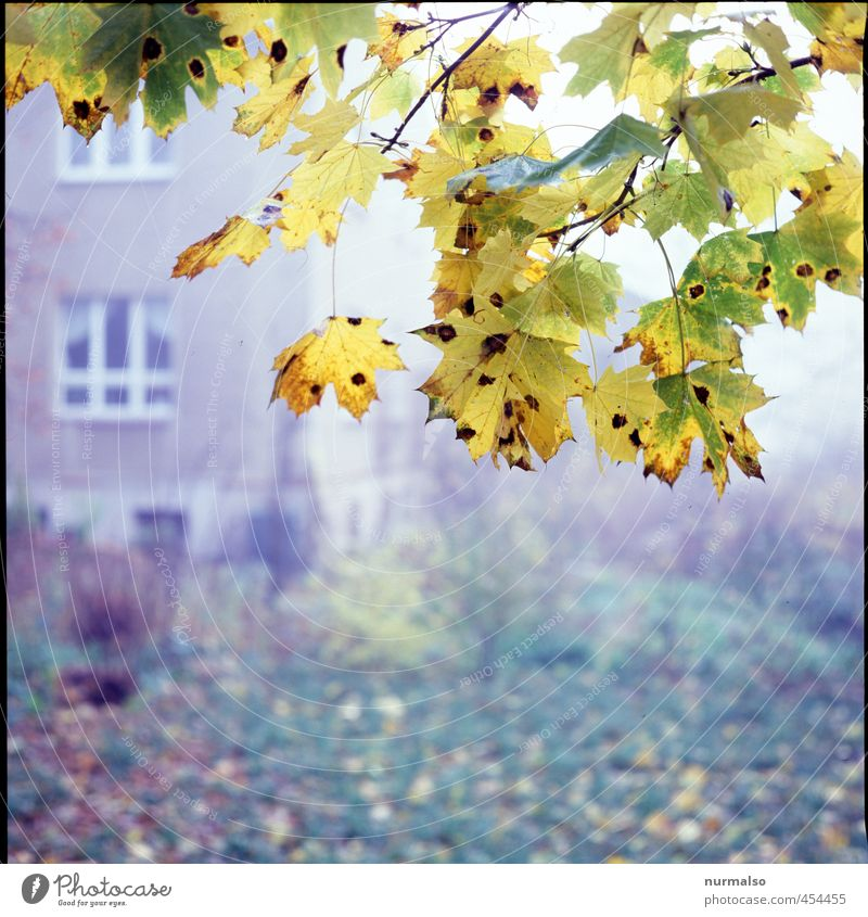 into autumn Living or residing Garden Nature Plant Animal Autumn Beautiful weather Fog Tree Leaf Faded Esthetic Dark Cold Wet Trashy Yellow Gold Green Emotions