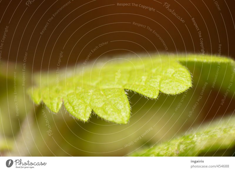 Nature Green Plant Leaf Spring Brown Growth Near Fine Light green