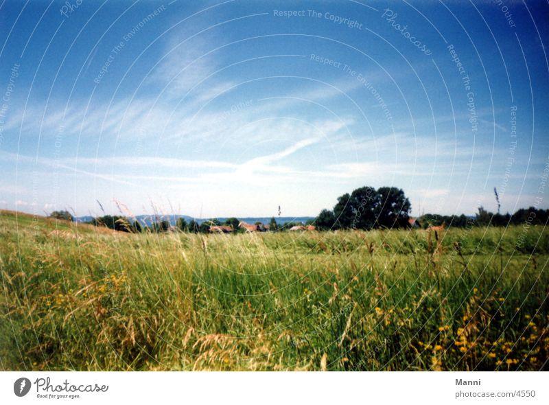 meadow Meadow Grass Sky
