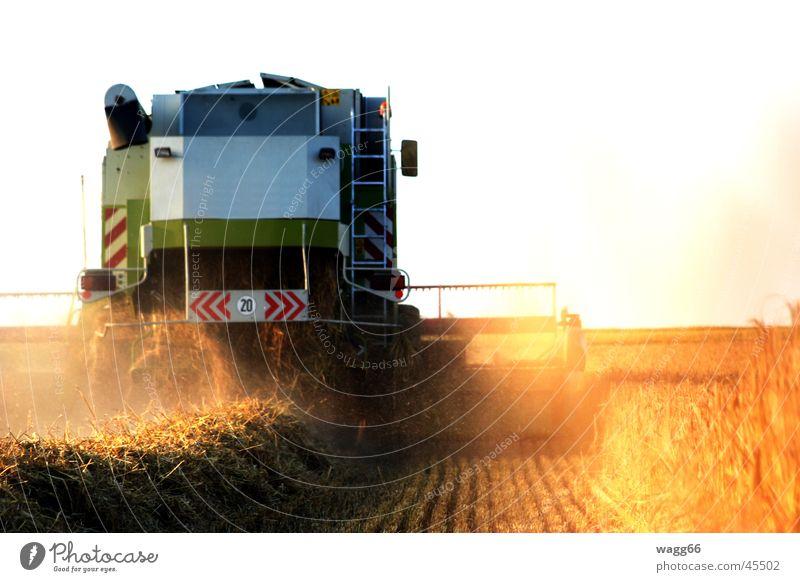Harvest Time Light White field harvester drusch Deployment Grain sunset claas