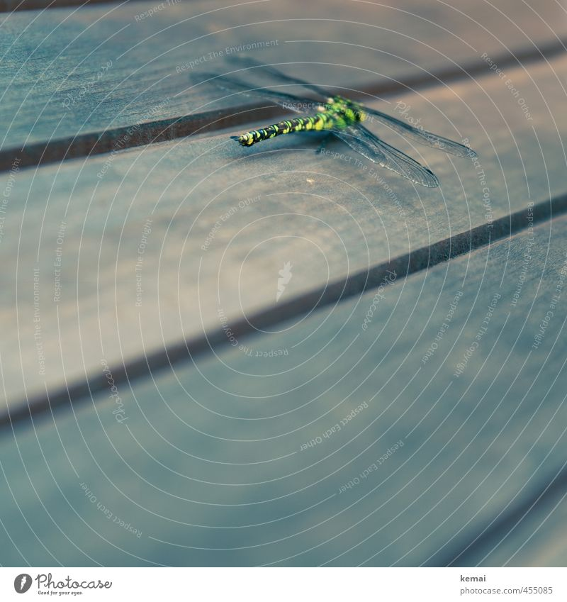 Lost Animal Wild animal Insect Dragonfly Dragonfly wing 1 Wood Sit Yellow Green Colour photo Subdued colour Exterior shot Close-up Detail Copy Space bottom Day