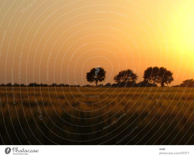 Beautiful Tree Sun Calm Yellow Meadow Freedom 3 Infinity