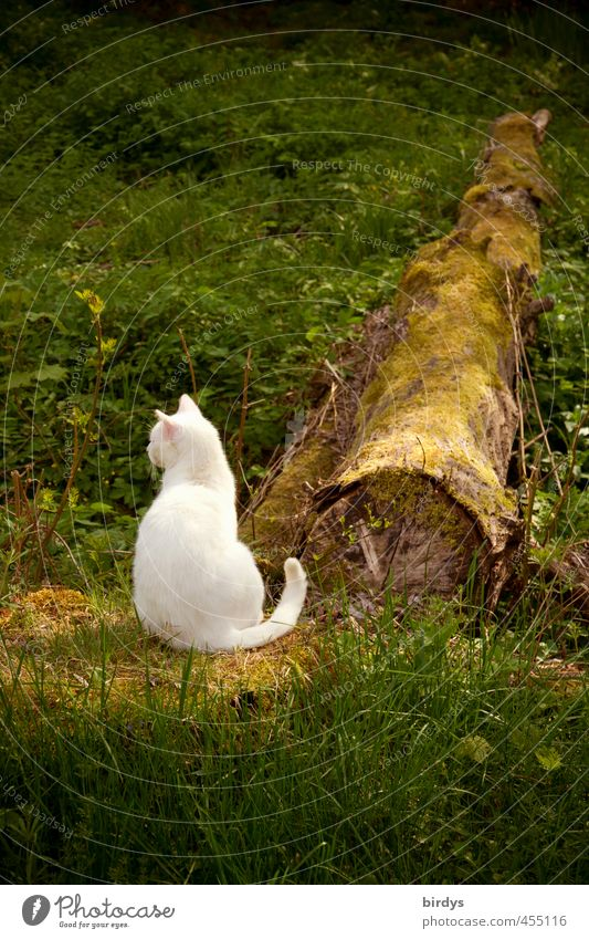 Cat Nature Beautiful Green White Plant Summer Animal Natural Garden Contentment Sit Authentic Esthetic Observe Tree trunk