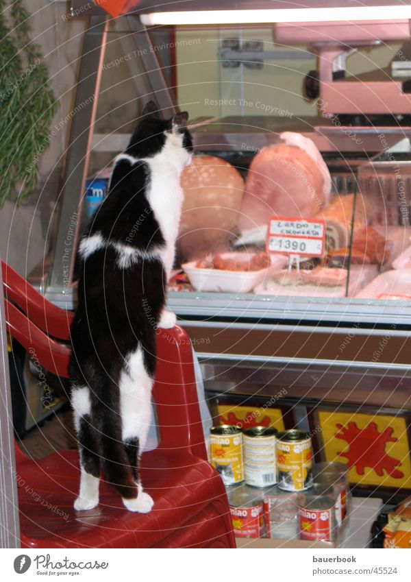 hangover Cat Butcher Italy Longing Ham Food Store premises Customer Snapshot Disappointment Far-off places Frustration Nutrition Appetite Window pane