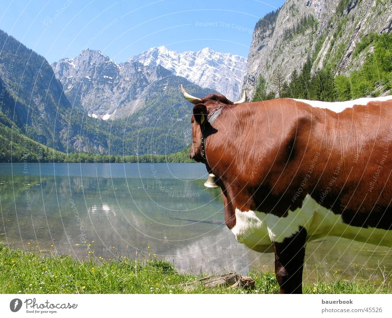 Nature Water Sun Summer Calm Loneliness Mountain Freedom Lake Landscape Contentment Bavaria Vantage point Pure Alps Longing