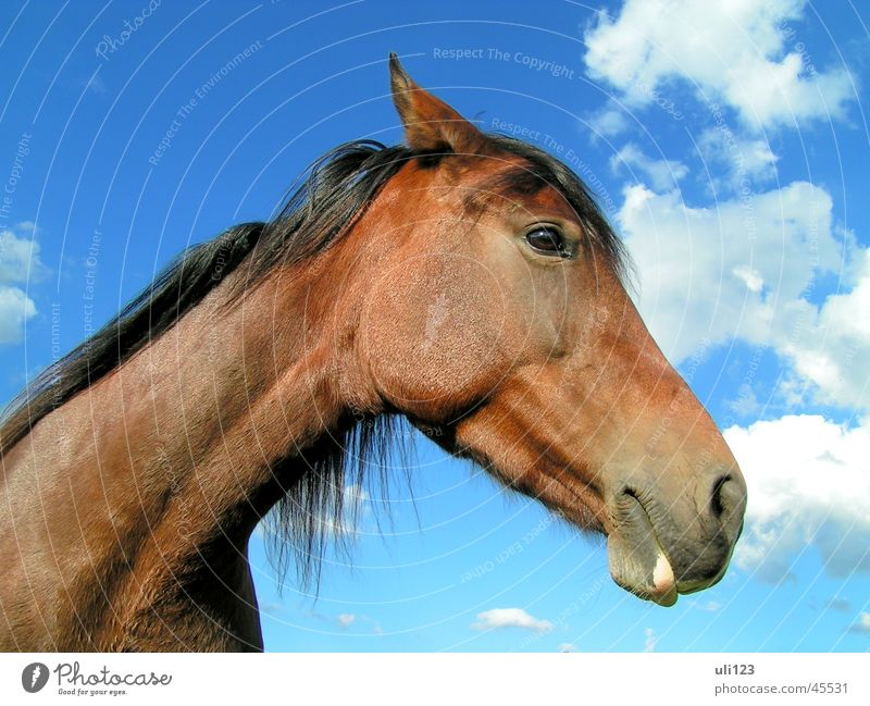 horse portrait Horse Clouds Brown Transport Sky Blue