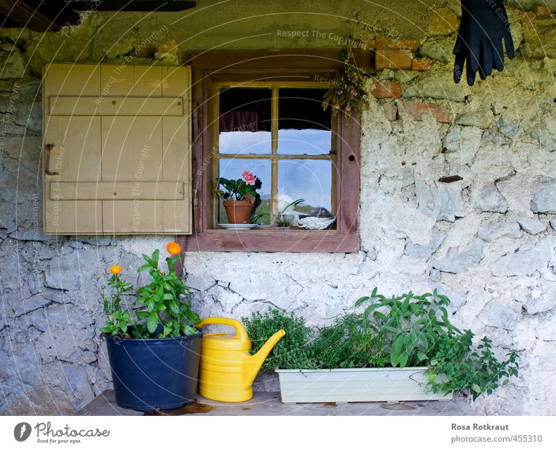 Still life with watering can Summer Mountain House (Residential Structure) Garden Nature Plant Blossom Foliage plant Pot plant Blossoming Hang Old Yellow Gray