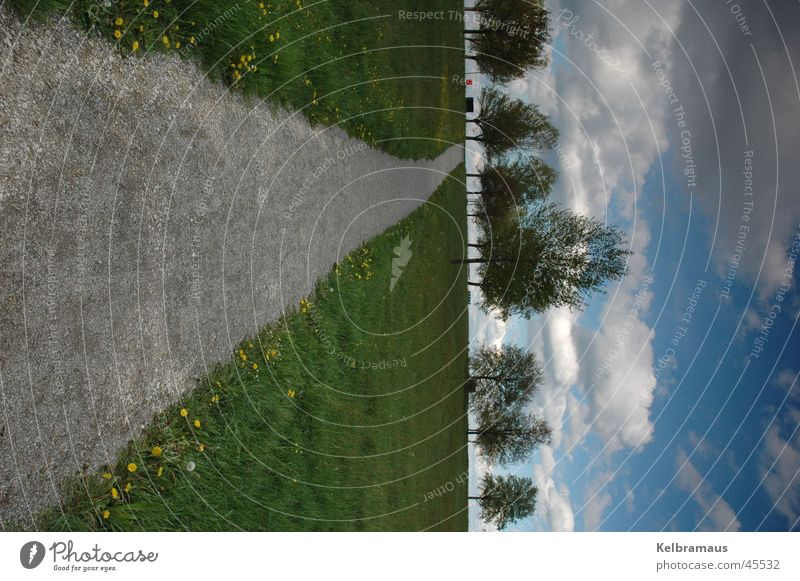 way up Meadow Tree Clouds in the sky Portrait format Summer Lanes & trails Far-off places Line