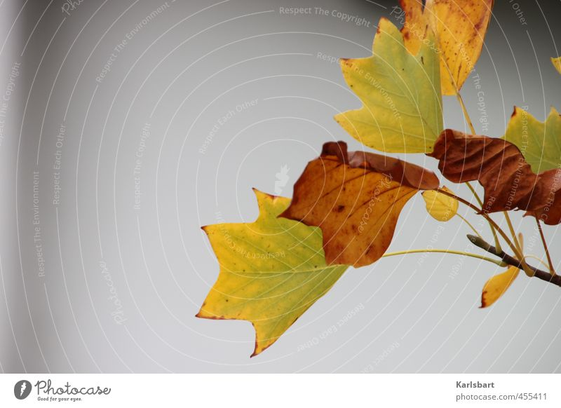 Nature Plant Colour Tree Leaf Forest Environment Wall (building) Autumn Movement Wall (barrier) Gray Garden Health care Park Fog