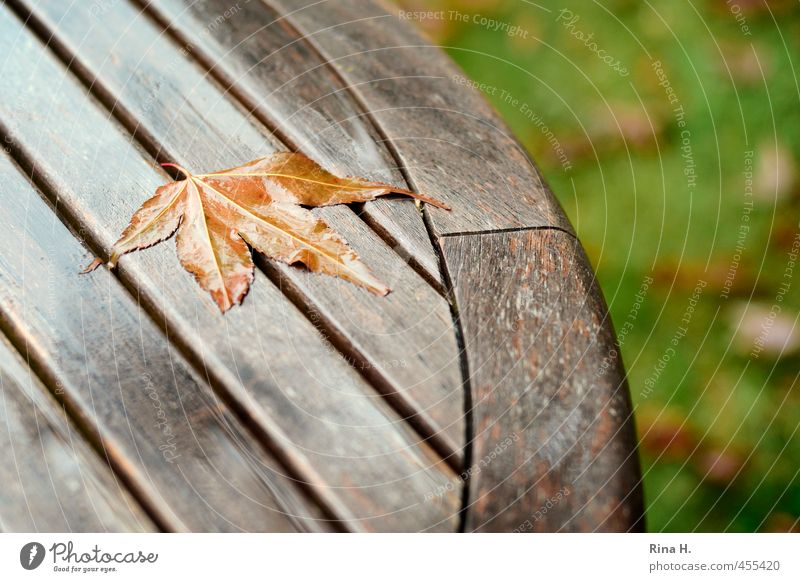 Leaf Meadow Autumn Natural Garden Rain Transience Change Seasons Maple leaf Bad weather Wooden table To dry up