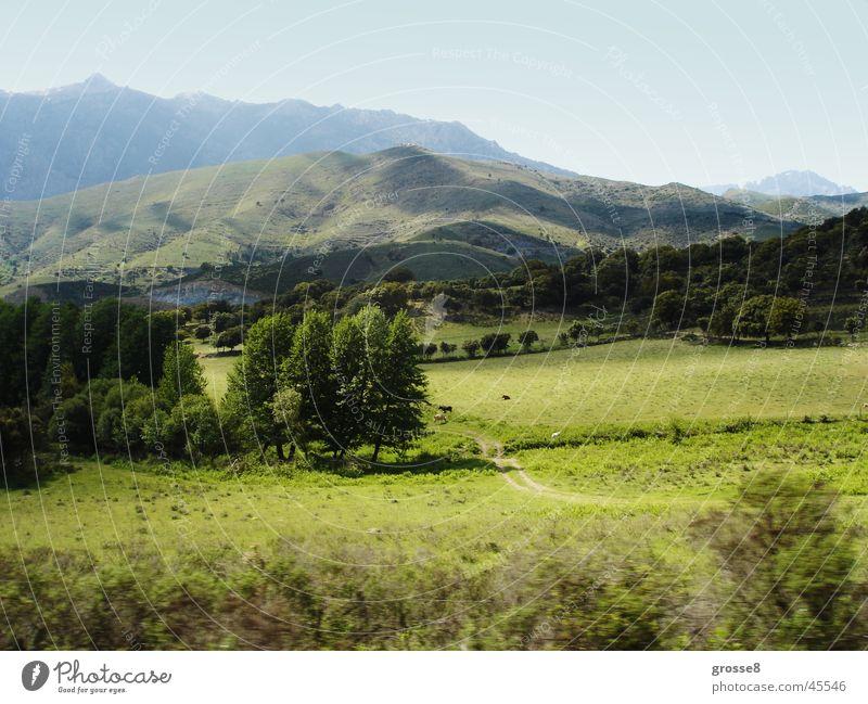 Green mountain landscape Meadow Corsica Calm Tree Mountain mountain country Far-off places