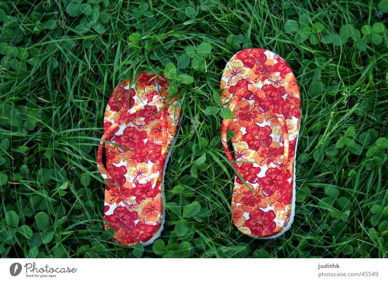 funky or funky? Grass Flip-flops Shuffle Summer Green Red Footwear Whispering grass Leisure and hobbies flowery