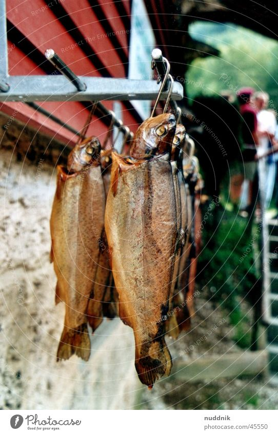 Nutrition Fish Catch Hang Fishing (Angle) Kipper Trout Smoked Brown trout Rainbow trout Smoked trout