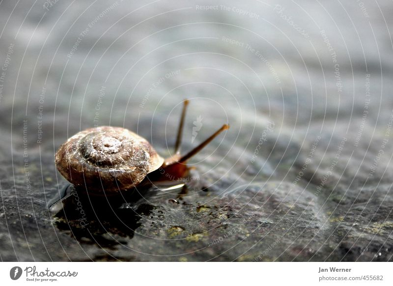 Take it easy! Living or residing House (Residential Structure) Autumn Rain Street Animal Snail Snail shell Snail slime 1 Stone Animal tracks Running Relaxation