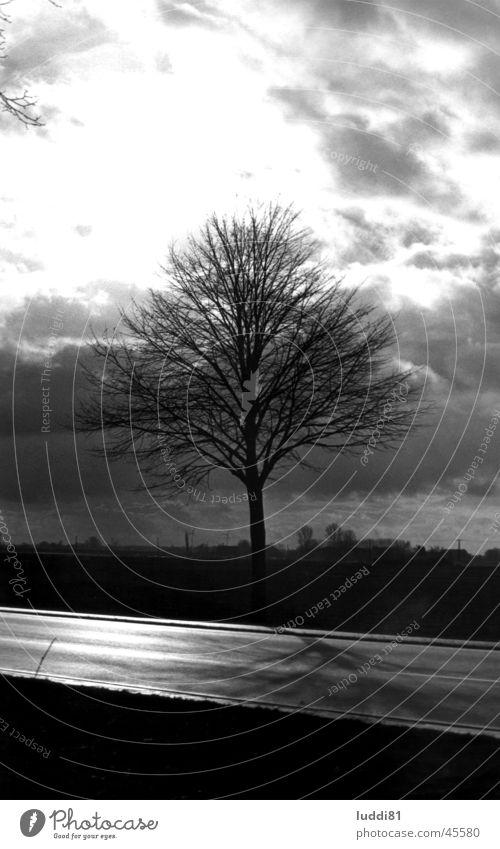 lonely tree Tree Niederrhein Emmerich Individual Back-light Street