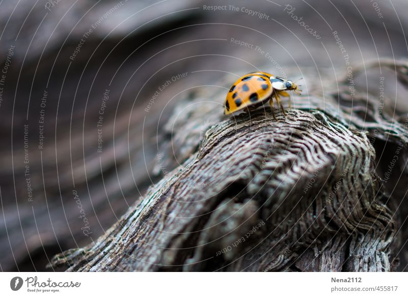 There is height in life... Environment Nature Animal Beautiful weather Tree Garden Park Forest Beetle 1 Fight Walking Looking Small Orange Red Ladybird