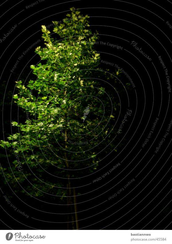 Tree Green Calm Deciduous tree