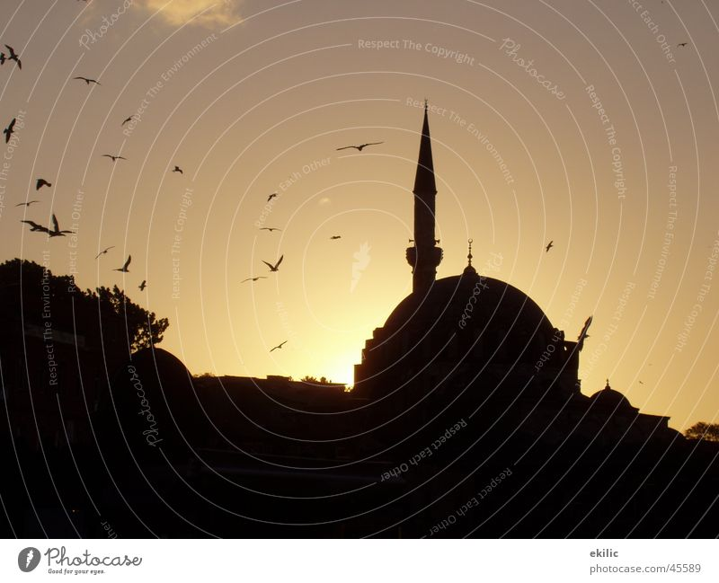Istanbul Turkey Mosque Islam Sunset Success Sky