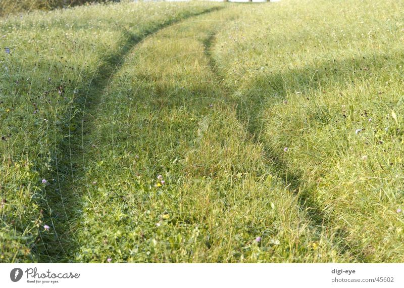 Meadow Grass Lanes & trails Moody Infinity Footpath
