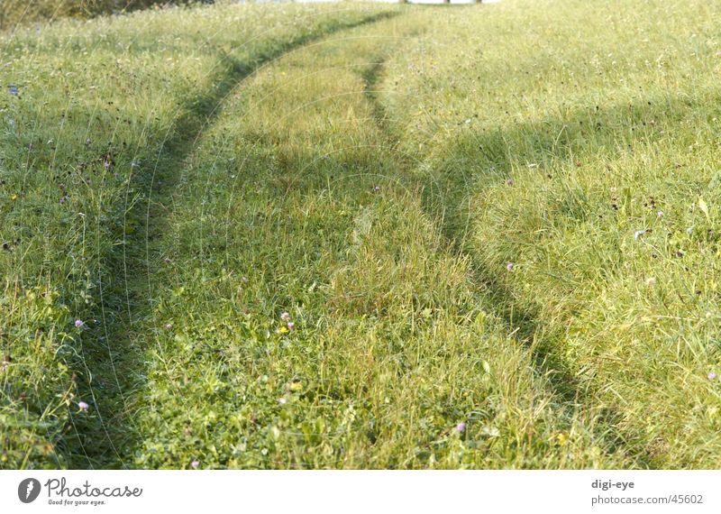meadow path Meadow Footpath Grass Moody Infinity Lanes & trails