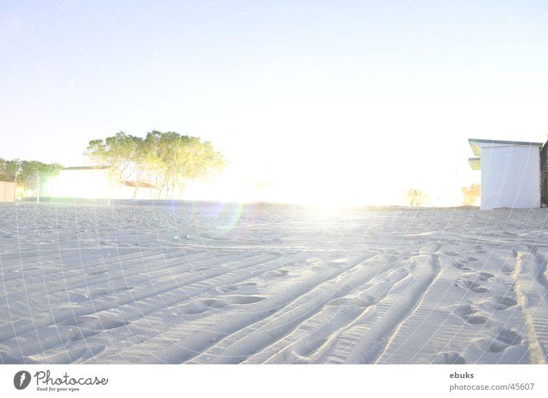 White Tree Beach Bright Overexposure Bomb