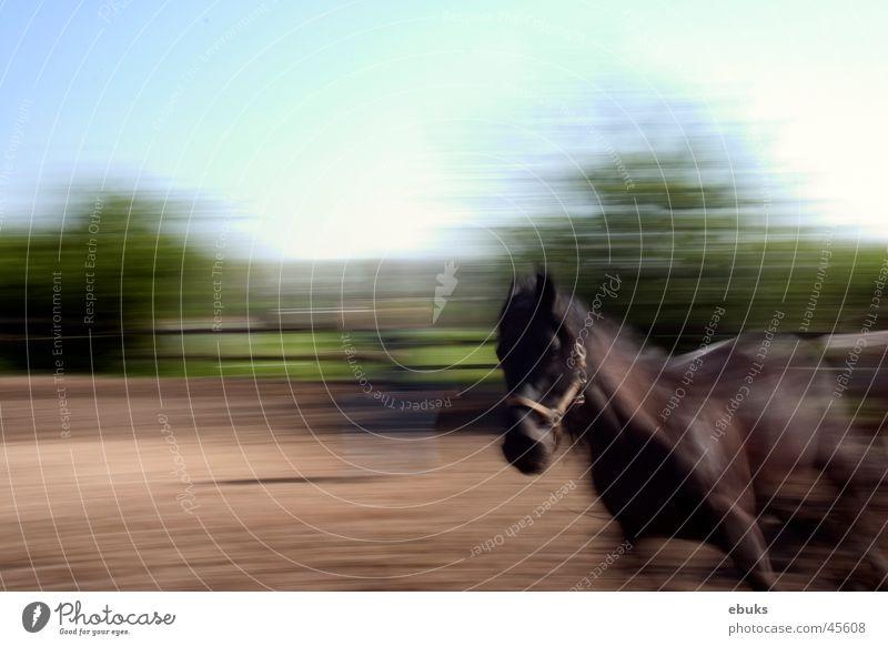 Nero Horse Speed moreover