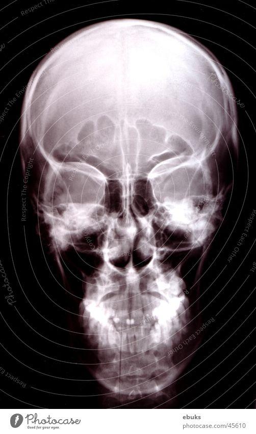 White Black Head Skeleton Death's head Photographic technology