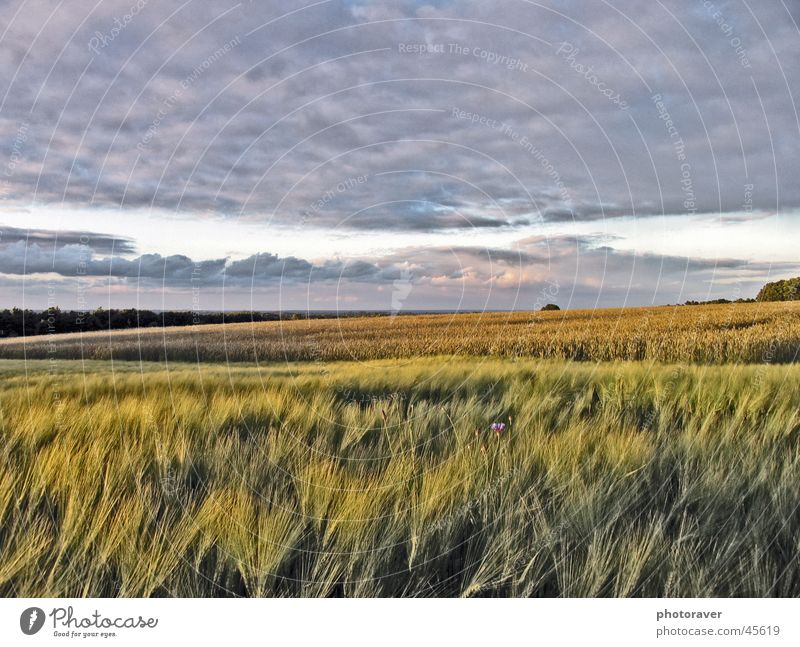 Nature Sky Clouds Autumn Field Grain Wheat