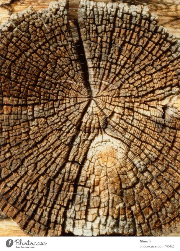 Old Tree Wood