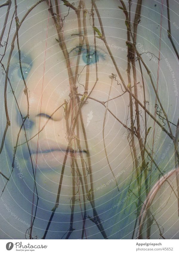 Alone Vine tendril Dream Winter Spring Calm Thought Woman Emotions Loneliness