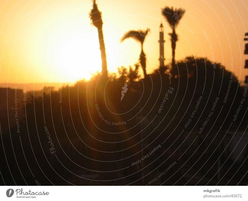 egypt / luxury Egypt Luxor Sunset Palace Palm tree