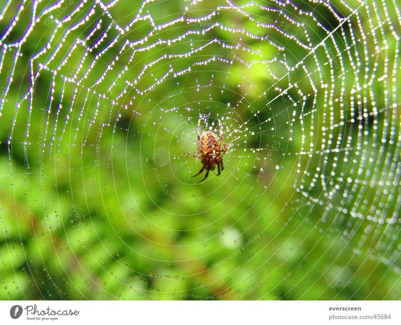 Green Autumn Spring Legs Brown Back Flying Wet Drops of water Fingers Net Observe Appetite Dew Beetle