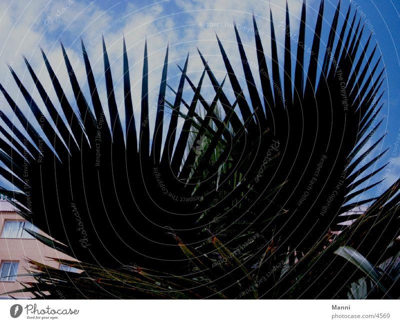 Sky Leaf Clouds Palm tree Tree Palm frond