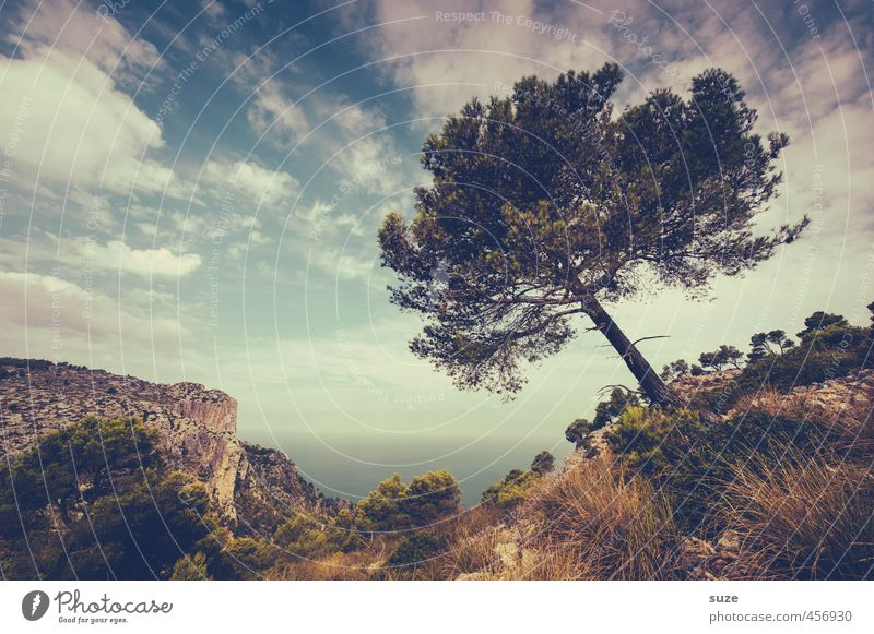 Sky Nature Vacation & Travel Plant Summer Tree Ocean Landscape Clouds Environment Meadow Travel photography Coast Rock Horizon Earth