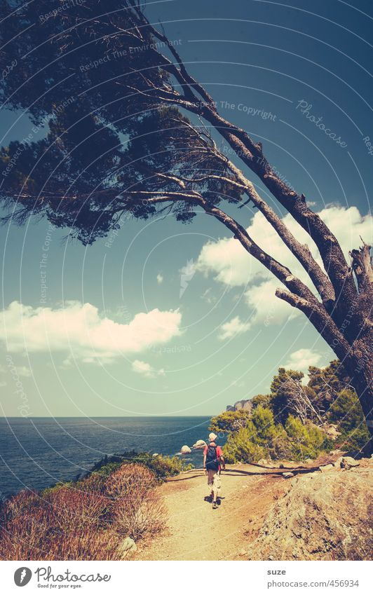 Human being Sky Nature Vacation & Travel Summer Tree Ocean Landscape Travel photography Lanes & trails Coast Leisure and hobbies Idyll Wind Hiking Vantage point