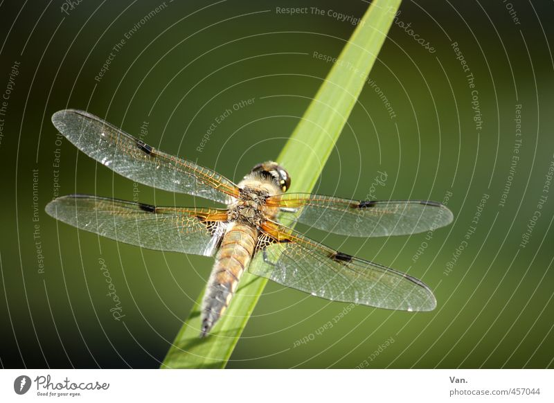 dragonfly Nature Plant Animal Grass Blade of grass Garden Wild animal Wing Dragonfly Insect 1 Green Colour photo Multicoloured Exterior shot Close-up Deserted