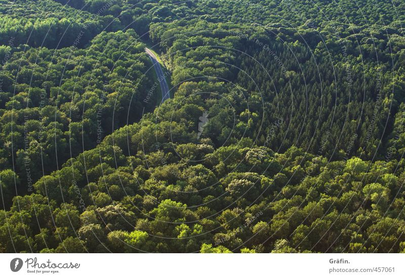 Nature Green Summer Tree Loneliness Landscape Forest Street Above Horizon Adventure Logistics Traffic infrastructure Mobility Brash Environmental protection