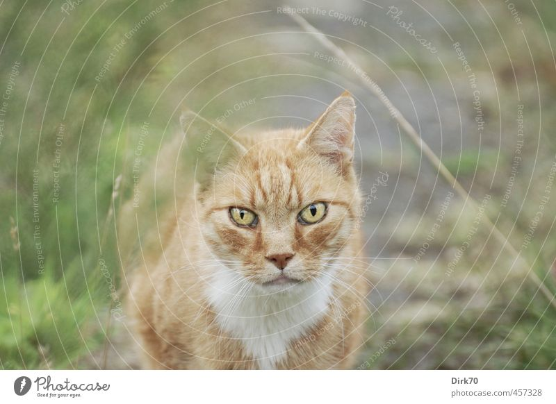 Eye contact - if you blink, you lose. Grass Moss Garden Park Meadow Lanes & trails Animal Pet Cat Land-based carnivore 1 Observe Hunting Looking Threat Cold